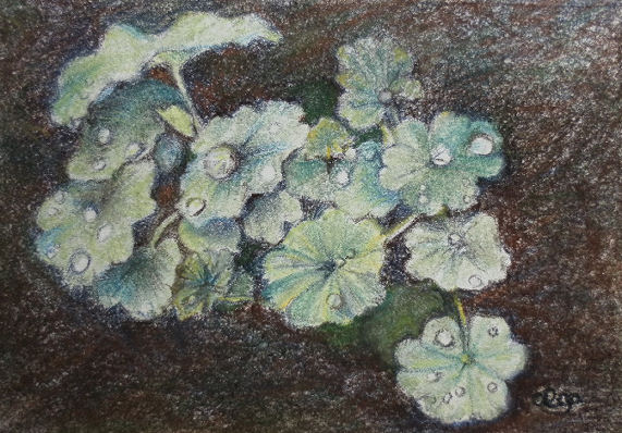 tuinplantje