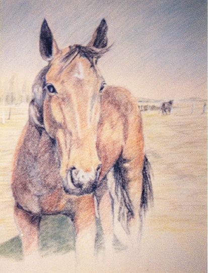 Paard [Pastel]